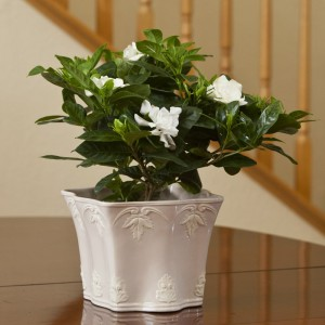 gardenia-gp-gar62-decorative-cache-stairs-003_1
